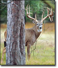 Trophy Buck Photo - Image 1-18