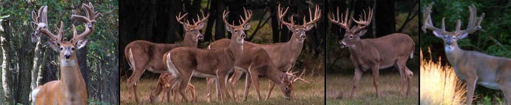 If trophy whitetail bucks are your passion, you must visit Rhino Hunt Club in Custer, MI for your West Michigan deer hunting experience in a high fence deer preserve.