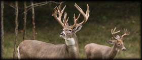 Deer Hunt Pricing